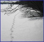 prints_snow